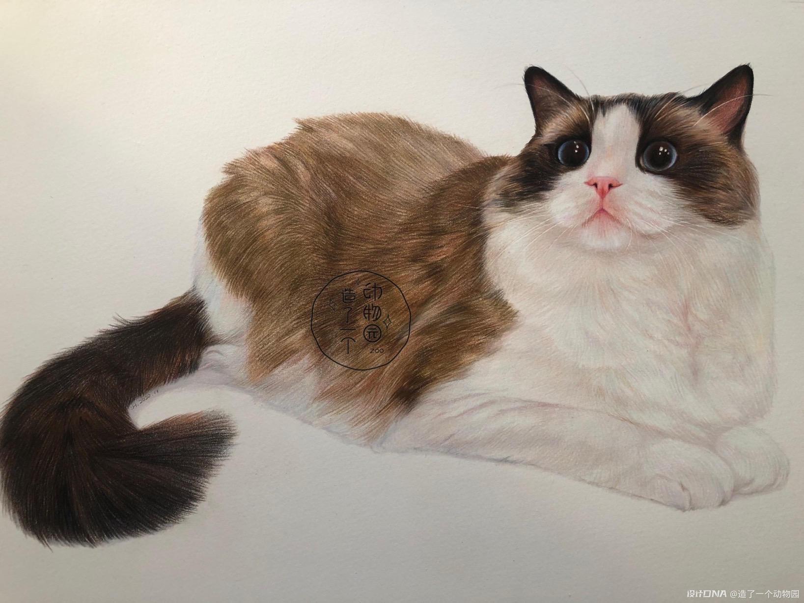 手绘彩铅动物 图9