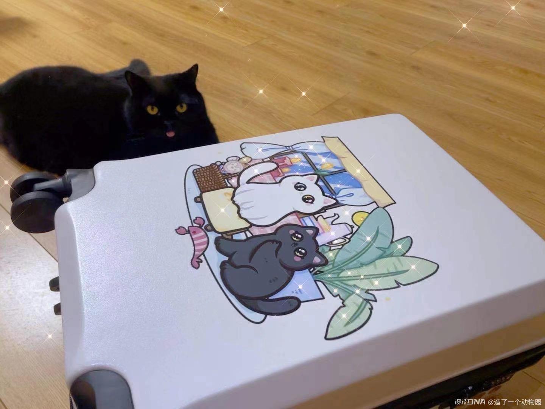 手绘猫猫头像 图7